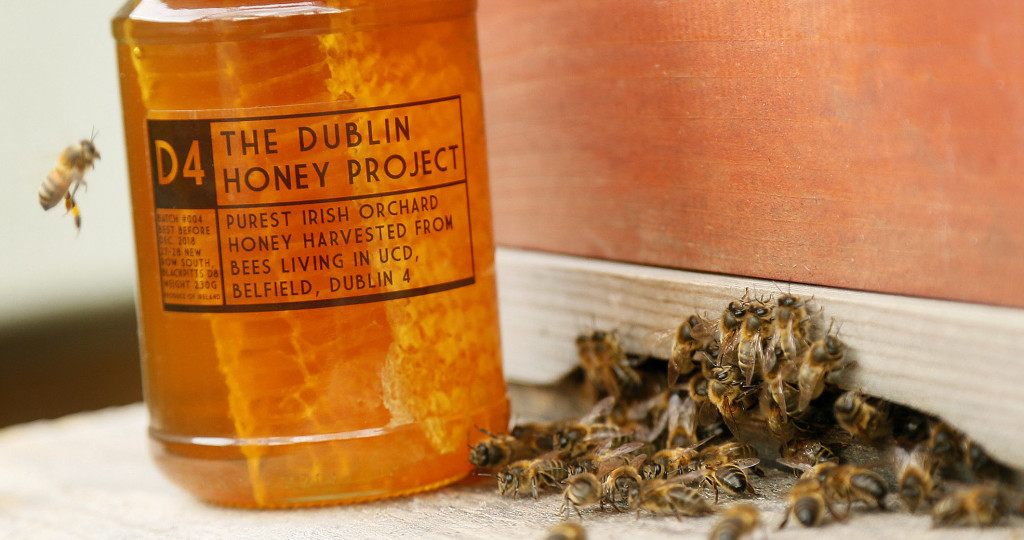 Dublin Honey Project