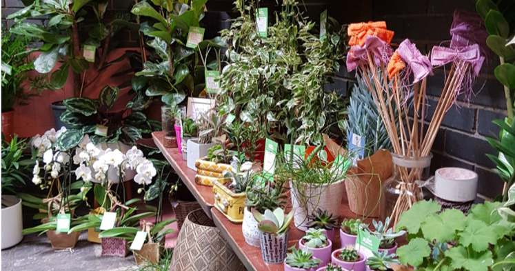PlantStore stall at the Dublin Flea Christmas Market